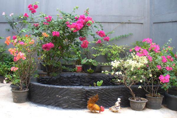 Tips Merawat Tanaman Bunga dalam Pot