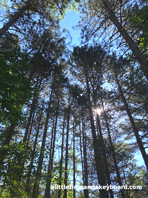 Reveling in trees above reaching the sky at Kohler-Andrae State Park in Sheboygan, Wisconsin
