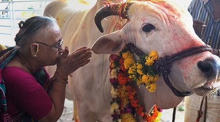 गुजरात में गाय की हत्या पर उम्रकैद: नया कानून