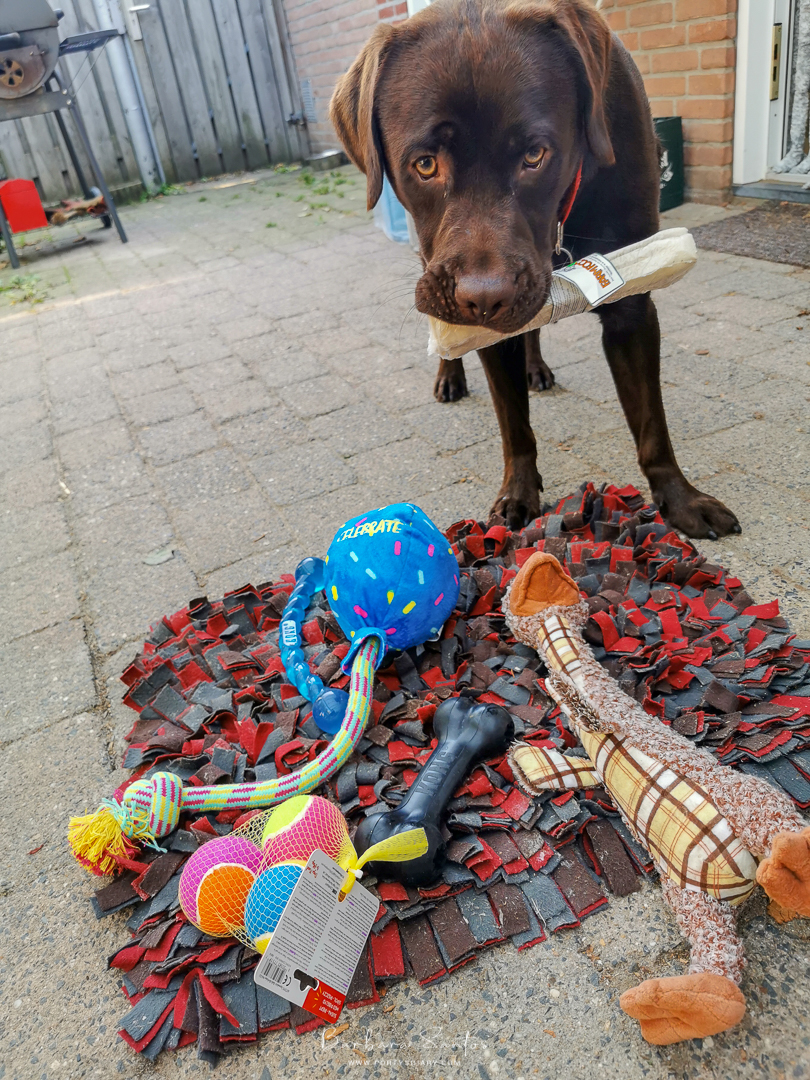 Cooper and his birthday gifts from Kong and Farm Food.