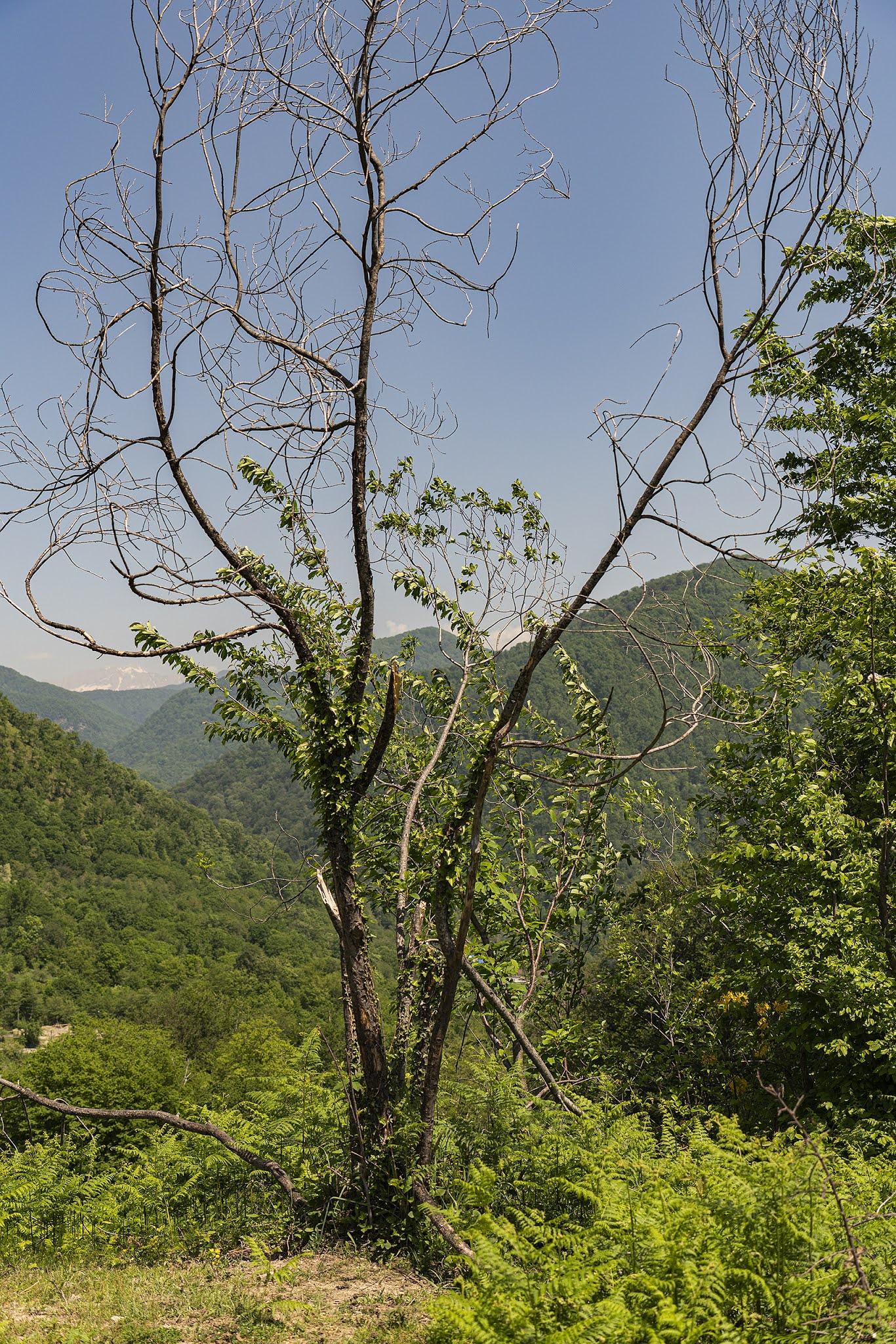 tree thin unusual south Dagomys photo Igor Novik