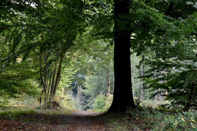 http://www.otchipotchi.com/p/r-reserve-naturelle-du-vuylbeek.html