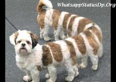 whatsapp-dp-funny-whatsapp-dp