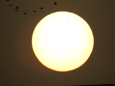 The sun and birds