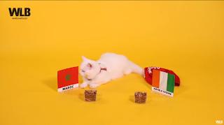 PRONOSTICS DE LA CAN 2019 I القطة ميمي جات باش تعطينا توقعها لتاني ماتش ديال المغرب ضد ساحل العاج