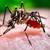 Paraíba apresenta crescimento na notificação dos casos de dengue.