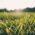 Não espere a grama verde