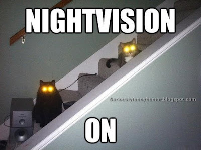 Cats yellow eyes glowing funny meme - Nightvision On!