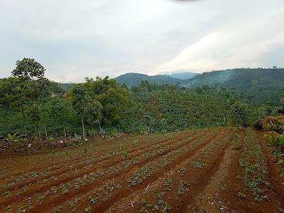 Way Tenong, Lampung Barat