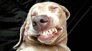 Anjing Lagi Asik Selfi