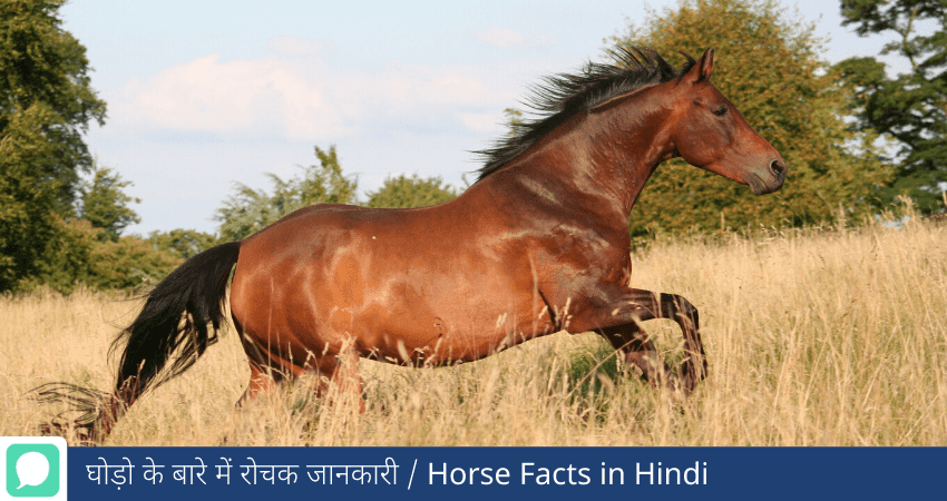 facts about Horse in Hindi