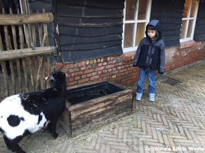 Animals on the farm at Center Parcs Erperheide