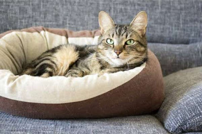Get Some Extraordinary and Quality Cat Beds for Your Friends Get Some Extraordinary and Quality Cat Beds for Your Friends