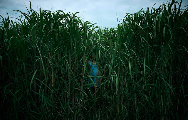 """Trailer de """"Campo do Medo"""" apresenta um novo conto sombrio de Stephen King"""