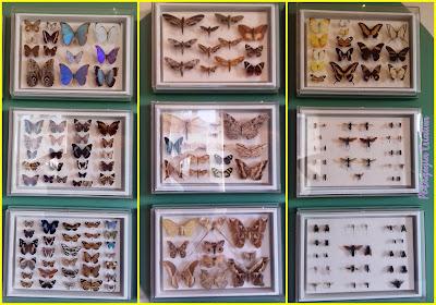 borboletas e besouros