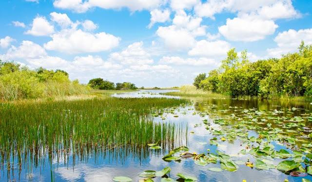 Image zone humide avec végétation dans les Everglades à Miami.