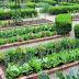 घर में आसानी से बनाएं किचन गार्डन (Make Kitchen Garden At Home)