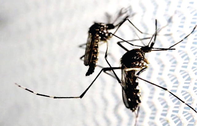 Zika-infected woman in PH fully recuperated