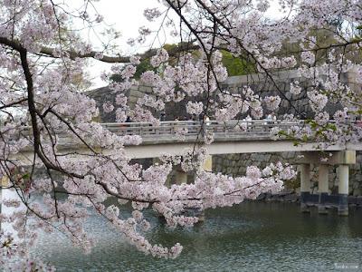 桜越しの極楽橋