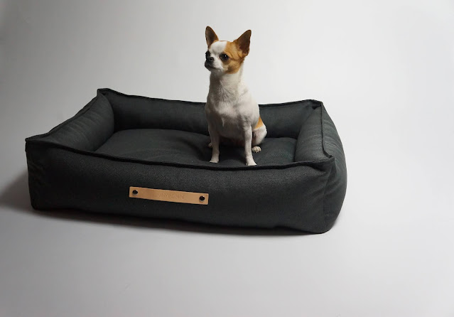 A small dog on a new looking dog bed
