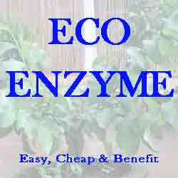 Mengenal Eco Enzyme Full Benefits, Cheap and Easy