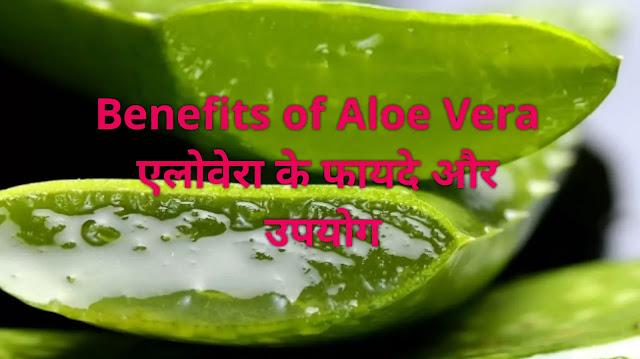 Benefits of Aloe Vera - एलोवेरा के फायदे तथा उपयोग