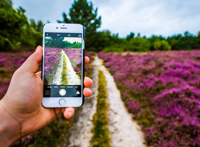 تطبيق للتعرف على انواع النباتات Flora Incognita