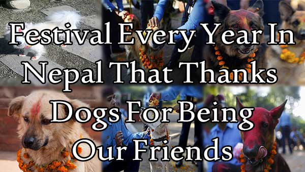 The Festival Every Year In Nepal That Thanks Dogs For Being Our Friends