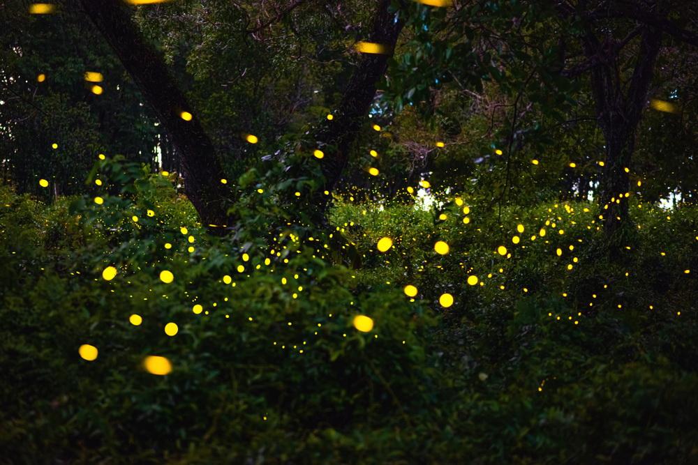 Светлячки Ивахиг на Филиппинах