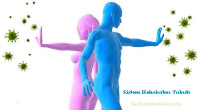 Sistem Kekebalan Tubuh (Sistem Imun) - berbagaireviews.com