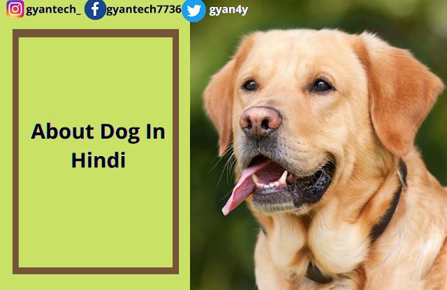 Dog in Hindi  । कुत्ता पर छोटे निबंध