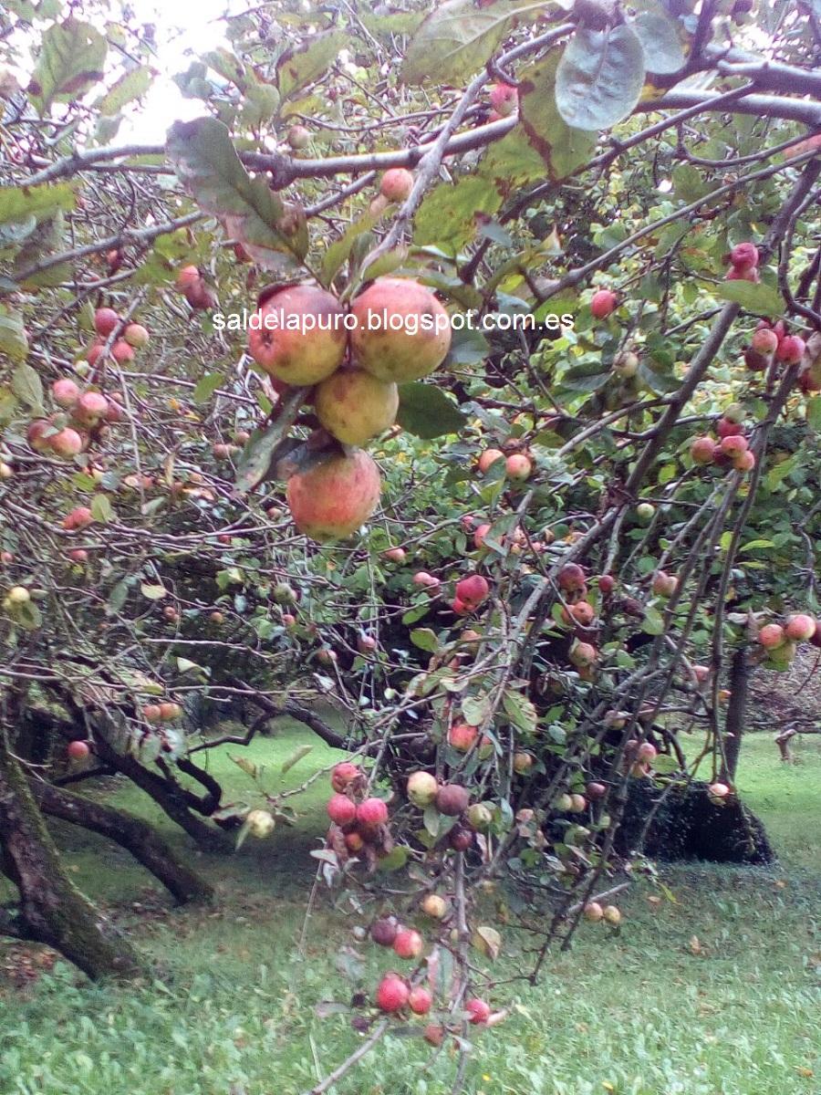 manzanas-pomarada-otoño-asturias