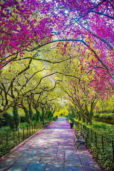 Spring in Central Park, New York City