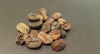 Faktor-Faktor yang Menentukan Jumlah Kafein