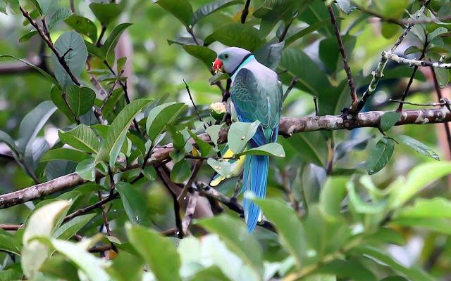 Top-5-Birds-in-India