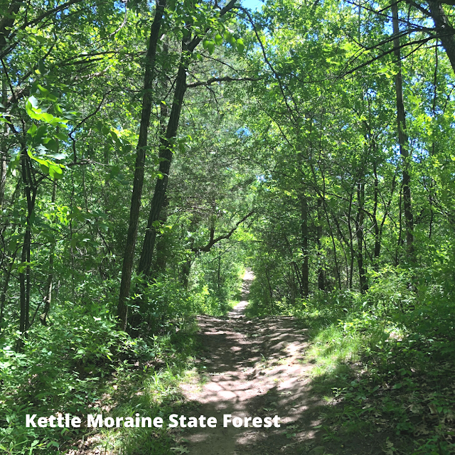 The dense forest at Kettle Moraine State Forest in Wisconsin will quickly engage you in escaping the every day.