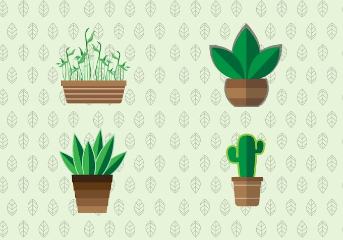 Flat Potted Plant in Adobe Illustrator