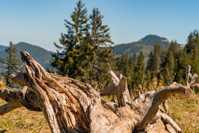 Wandertrilogie Allgäu | Etappe 51 Bad Hindelang-Schattwald/Tannheimer Tal 12