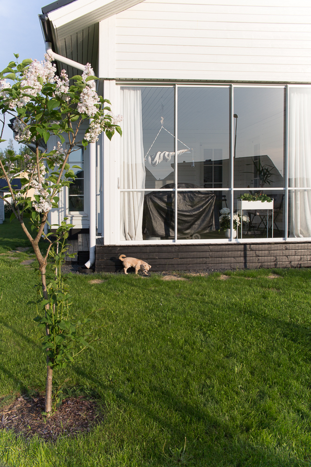 Villa H, piha ja puutarha, chihuahua, moskovan kaunotar, lasisettu terassi, aidattu piha