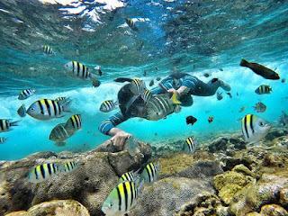 wisata snorkling pantai nglambor jogja