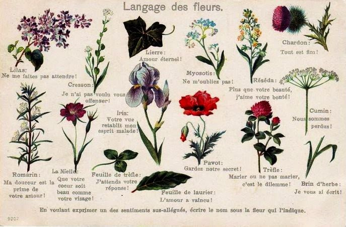 Nomi di fiori e piante d'ornamento in francese