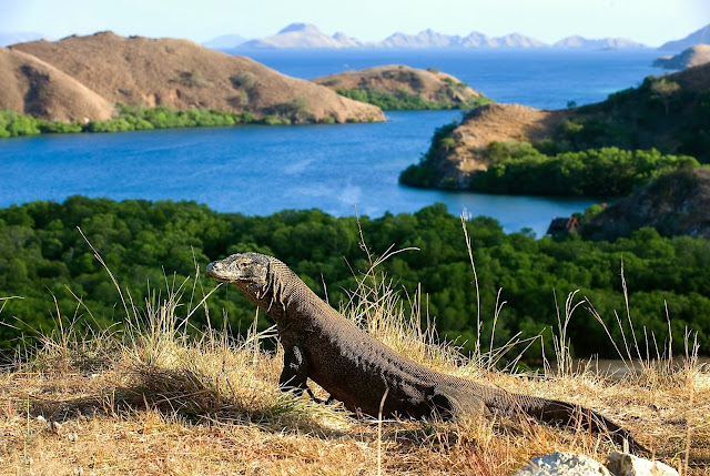 komodo national park dragon indonesia travel wallpaper images