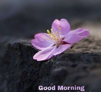 Good Morning Wishes Unique Image
