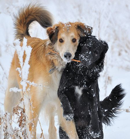 Cold weather pet tips from American Humane