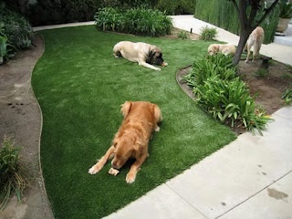 smart idea to attempt and discover a bit a lot more dogs artificial grass understanding of exactly what enters a correct artificial lawn