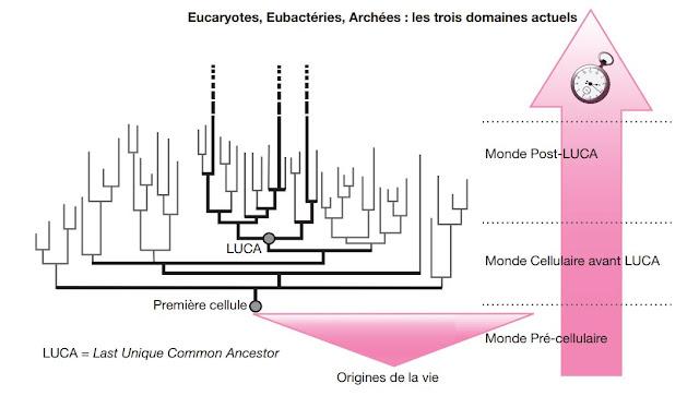 La place de LUCA dans l'évolution du vivant