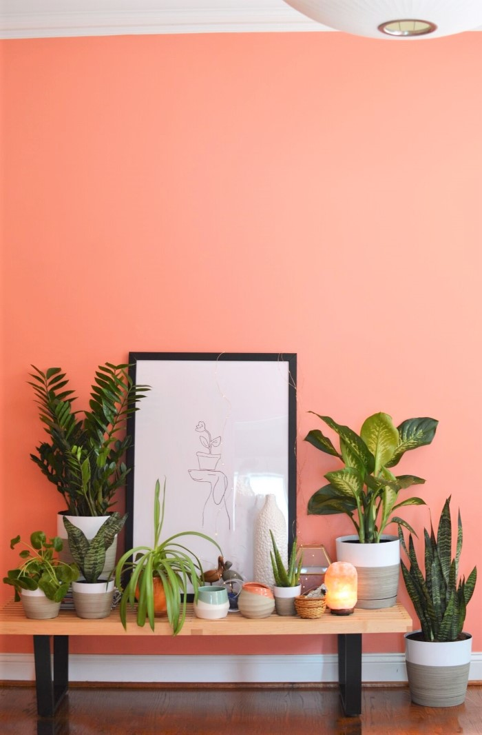 How To Care For 5 of The Best Easy To Care For Indoor Plants - design addict mom