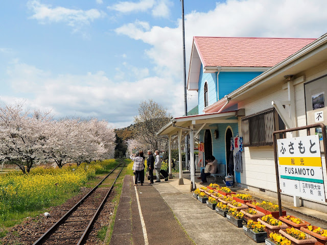 いすみ鉄道 総元駅 桜 菜の花