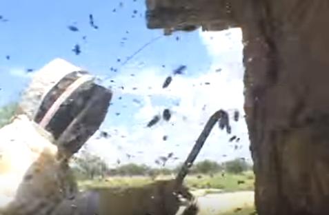 Πήγε ο καψερός να βγάλει ένα σμήνος: Έτυχε αυτό να είναι μέλισσες δολοφόνοι όμως...Το μακελειό σε βίντεο!!!