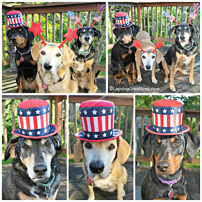 3 rescue dogs dressed up for fourth of july